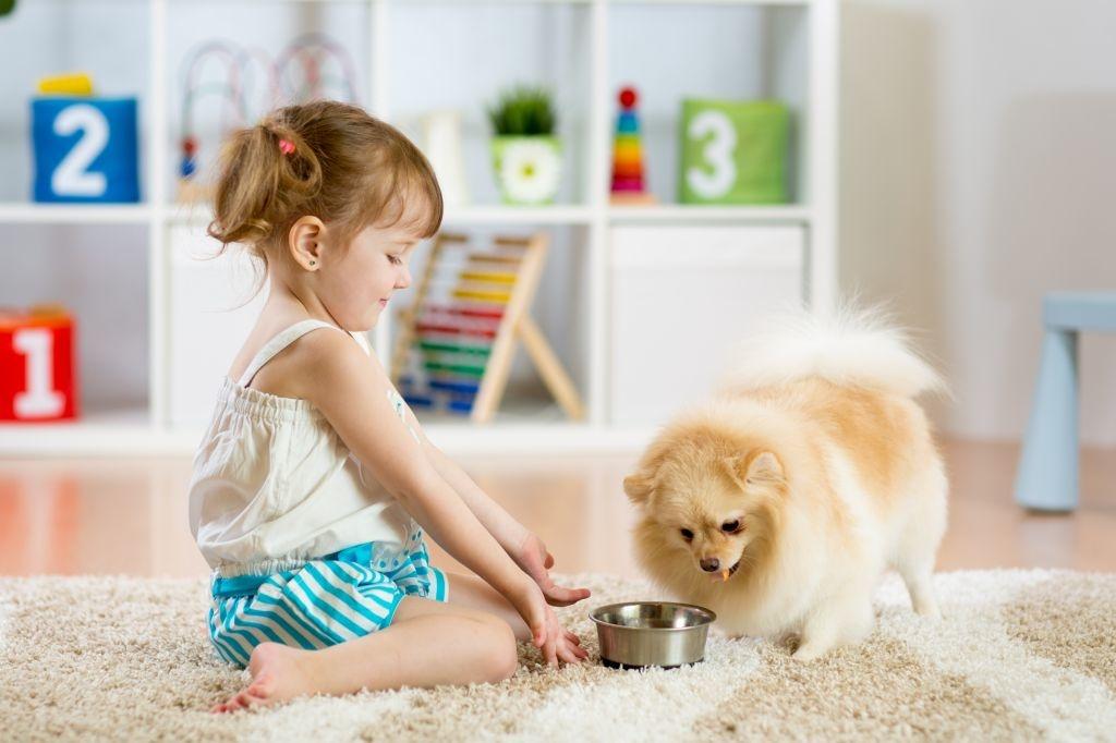 Der Pomeranian liebt Kinder und deren fantasievolle Spielideen