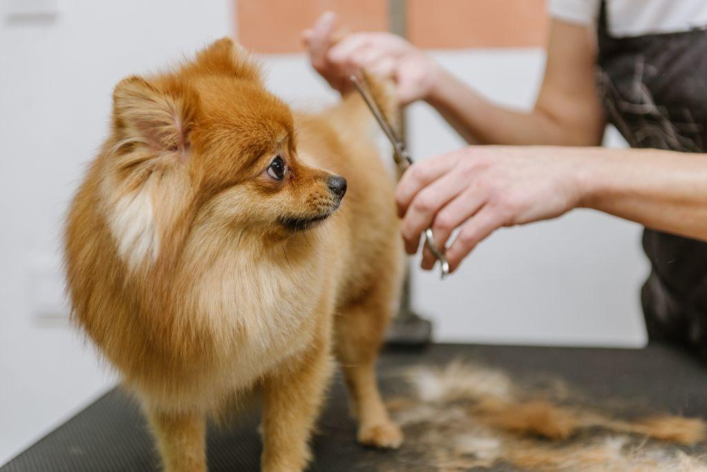 Für besondere Haarschnitte empfiehlt sich der professionelle Hundefriseur