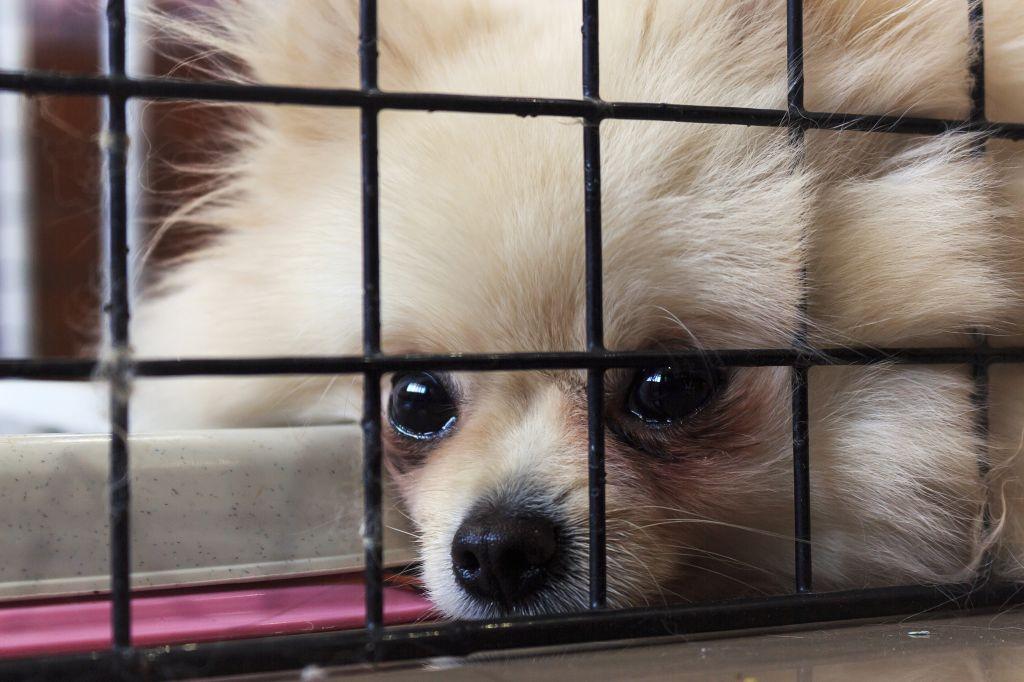 Immer wieder landen Welpen aus illegalen Aufzuchten in den Tierheimen