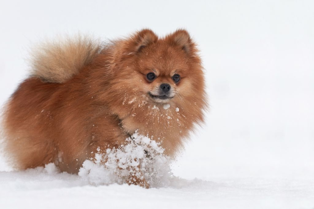 Im Winter sind die empfindlichen Pfoten besonderen Belastungen ausgesetzt